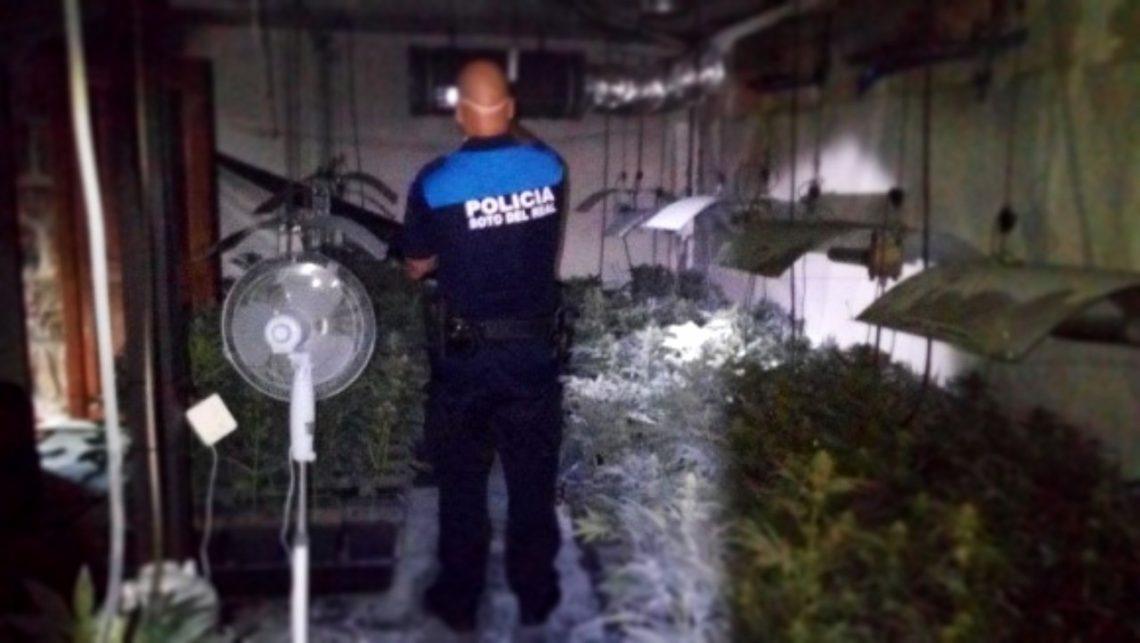 La Policía Local interviene una plantación de Marihuana en Soto del Real