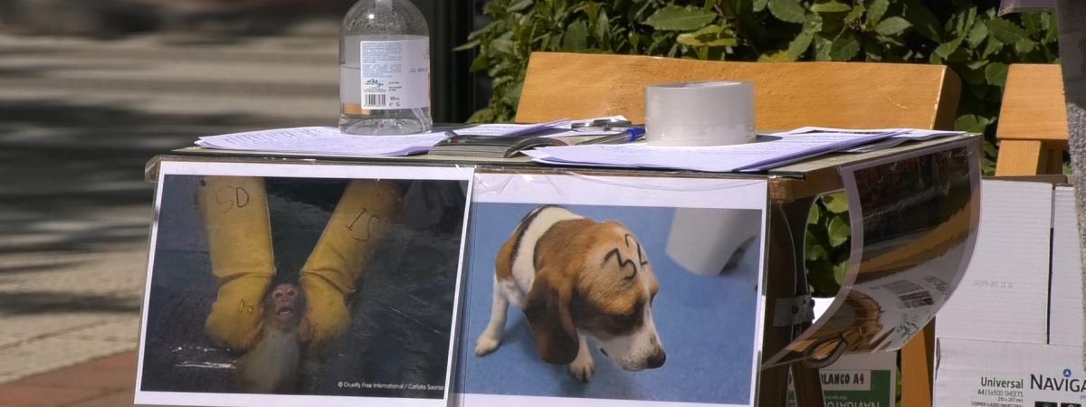 Firmas para liberar a los animales encerrados en Vivotecnia